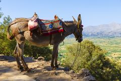 Tourists transported by donkeys to the Mount near to Zeus cave, Crete, Greece royalty free stock image