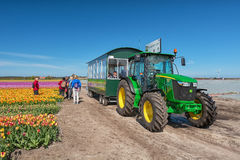 Tourists are transported by tractor along the beautiful flower f Royalty Free Stock Images