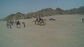 Tourists traveling with camels in Egypt. Tourist location in Egypt, driving through deserts in Sinai Peninsula and elsewhere stock footage
