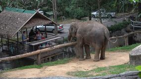 Tourists treat an elephant at the Chiang Mai zoo. Thailand
