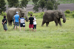 Tourists viewing African elephants Royalty Free Stock Image