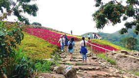 Tourists visit the colorful mountain flowers field stock footage