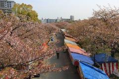 Tourists visit Osaka Mint for Sakura blossom festival, Osaka. Japan Royalty Free Stock Photos