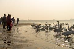 Tourists visit swan lake at Weihai, China Royalty Free Stock Photos