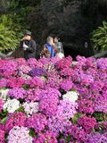 Tourists Visiting Flower Garden Royalty Free Stock Image