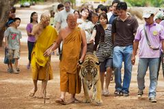 Tourists walk with tiger handled by Abbot Phra Acharn Phoosit Khantidharo in Tiger Temple Kanchanaburi, Thailand. KANCHANABURI, THAILAND - MAY 23, 2009 Royalty Free Stock Photo