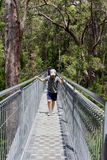 Tourists walk the Tree Top Walk in Walpole Nornalup, Western Australia Royalty Free Stock Images