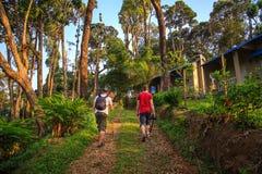 Tourists walk on the wild jungle.
