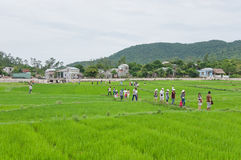 Tourists Walking across Rice Paddy Royalty Free Stock Images