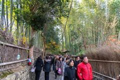 Tourists walking through Arashiyama Bamboo Grove Zen garden stock photography