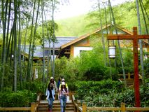 Tourists walking through a bamboo forest area. Few wooden houses background in tianmu lake liyang city jiangsu province China Stock Image