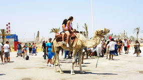 Tourists walking on camels in the port of La Goulette Royalty Free Stock Images