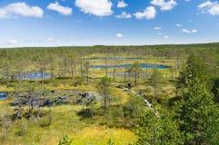 Tourists walking on hiking trail through marshland. Estonia stock image