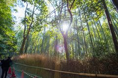 The tourists are walking path. Through the bamboo forest at Arashiyama, Kyoto, Japan Royalty Free Stock Photo