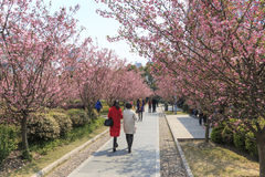 Tourists walking in People's Park one of the busiest in Shanghai. Shanghai, China - March 26, 2016: Tourists walking in People's Park one of the busiest in Stock Photo