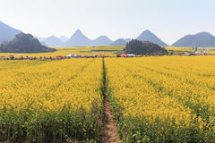 Tourists walking among Rapeseed flowers fields of Luoping in Yunnan China. Luoping is famous for the Rapeseed flowers that bloom o Stock Photography