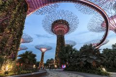 Tourists walking in the Supetree Grove area at the Gardens by the Bay in Singapore. Singapore, Singapore - October 16, 2018: Tourists walking in the Supetree royalty free stock photography