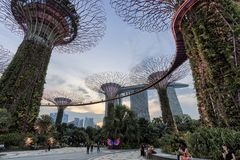 Tourists walking in the Supetree Grove area at the Gardens by the Bay in Singapore. Singapore, Singapore - October 16, 2018: Tourists walking in the Supetree stock photography