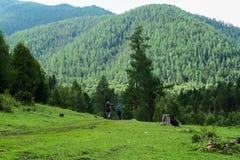 Tourists walking to the mountain forest. Altai mountains. Siberia. Russia. Tourists walking to the mountain forest. Altai mountains. Siberia royalty free stock photos
