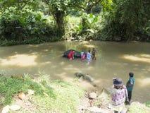 Tourists washing an elephant Stock Image