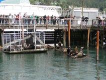 Tourists watch the California sea lions Stock Photos