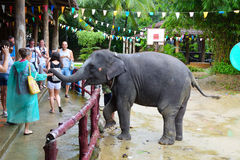 Tourists watch the elephant show in the pranks of Phang Nga in Thailand. A woman is feeding an elephant from her palm. Royalty Free Stock Photo