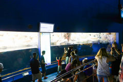 Tourists Watches Penguins at Aquarium - Barcelona, Spain Stock Photo