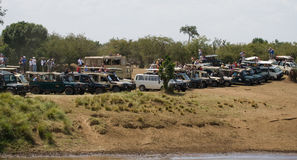 Tourists watching the crossing of wildebeest through Mara River. Maasai Mara National Park. Royalty Free Stock Images