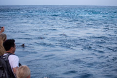 Tourists watching dolphins from a boat Stock Images