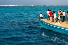 Tourists watching dolphins from a boat Royalty Free Stock Image