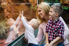 Tourists watching the insect in terrarium at zoo royalty free stock photography