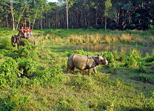 Tourists watching and photographing a rhino, Nepal Royalty Free Stock Photo