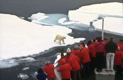 Tourists Watching a Polar Bear royalty free stock photos