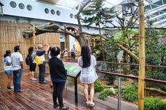 Tourists Watching Red Panda Royalty Free Stock Photography