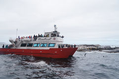 Tourists Watching Seal At Duiker Island Near Cape Town,South Afr