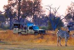 Tourists watching zebra at waterhole. Tourist watching zebra at waterhole at Khwai River in Botswana stock image
