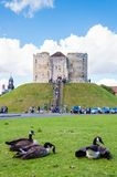 Tourists and wildlife in front of Clifford's Tower, York, England. York, United Kingdom - August 9, 2014: Tourists and wildlife in front of Clifford's Tower Stock Image