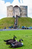 Tourists and wildlife in front of Clifford's Tower, York, England Stock Photo