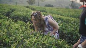 Tourists woman among many tea plantations at sri lanka, happy woman hiker. Asian tourists woman among many tea plantations stock video footage