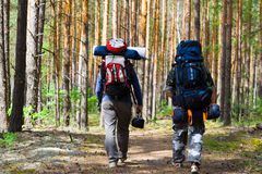 Tourists at wood Royalty Free Stock Photography