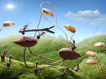 Tournament ants on birds, ant tales. Tournament in anthill ants on birds, ant tales Royalty Free Stock Photos