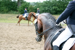 Tournament horse is ridden Royalty Free Stock Image