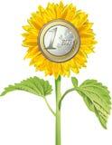 Tournesol avec l'euro pièce de monnaie Image stock