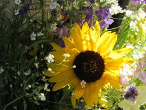 Tournesol avec la lumière du soleil de fond et le bouquet floral mélangé Photo libre de droits