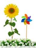 Tournesol avec les fleurs blanches Photo libre de droits