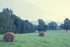 Tournesol dans la ferme organique Photographie stock