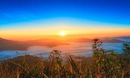 Tournesol dans le temps de lever de soleil avec le brouillard images libres de droits