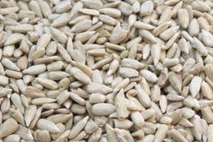 Tournesol de grain Image stock