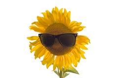 Tournesol en verres de soleil Images libres de droits