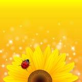 Tournesol et coccinelle sur le fond jaune Photographie stock libre de droits